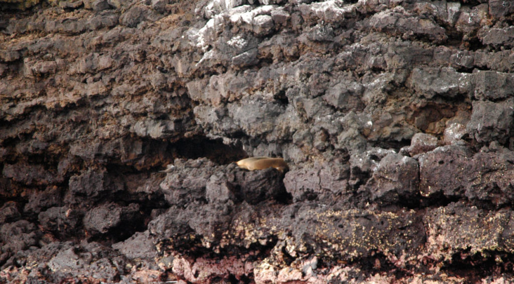 Champion - Floreana in Galapagos islands, view of a cove in the rocks with a sea lion