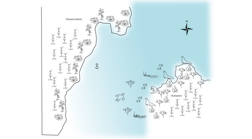 Champion in Floreana Island Illustrated map with animals and routes