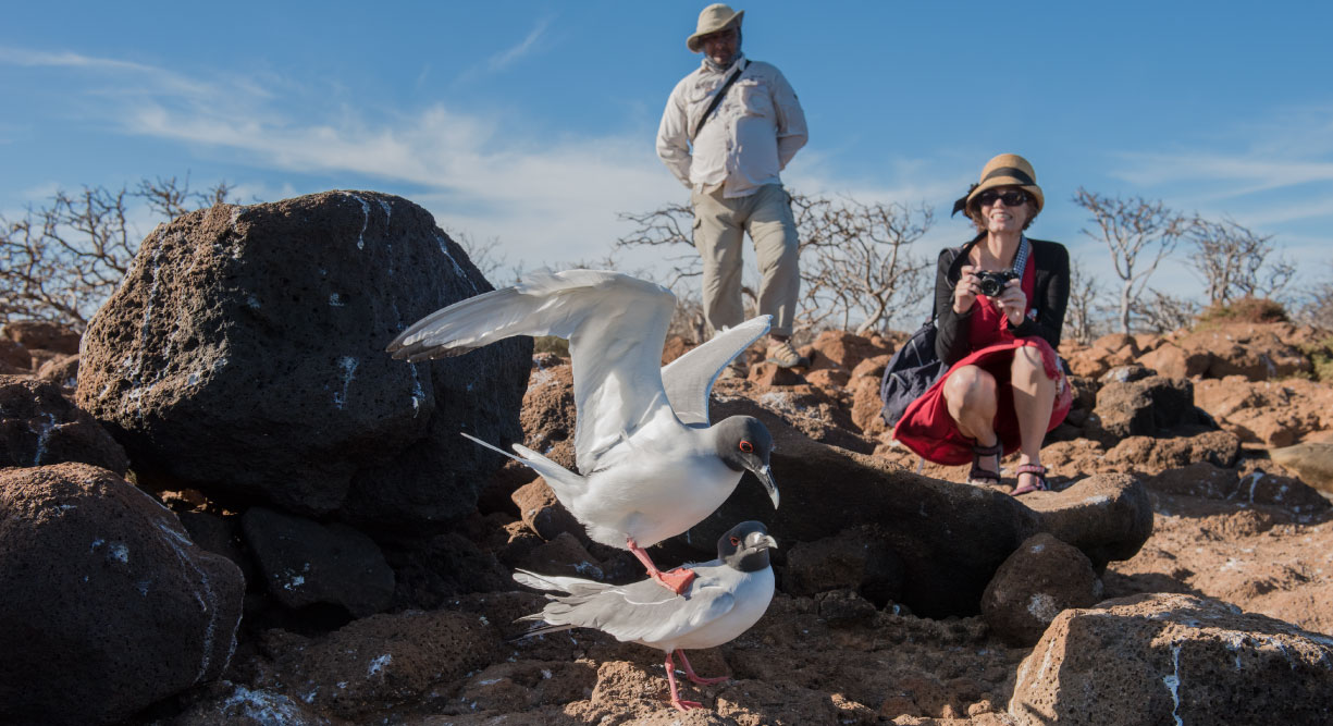 Dragon Hill - Santa Cruz in the Galapagos Islands, view of volcanic beach and tourist watching the seagulls