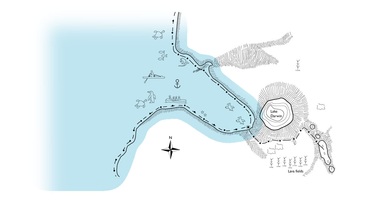 Tagus Cove in Isabella Island, Illustrated map with animals and route