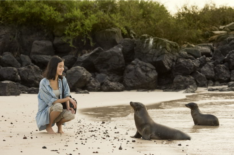 Tourist experience, watching the sea lions in the beach