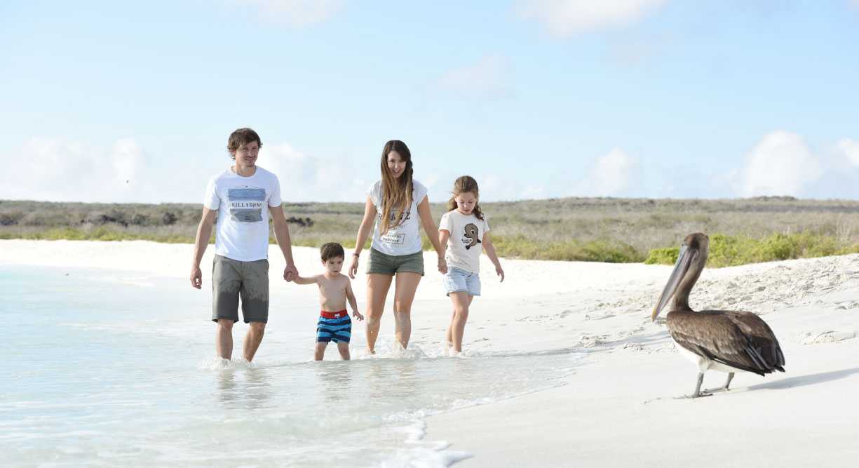 Gardner Bay - Española Islands with white sand beach, family walking and pelican