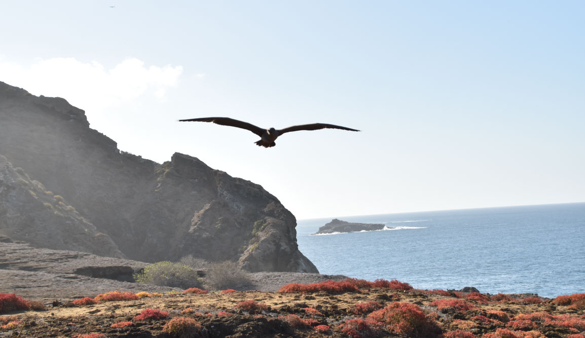 Pitt Point - San Cristobal in Galapagos Islands, view of a boobie flying over the hills
