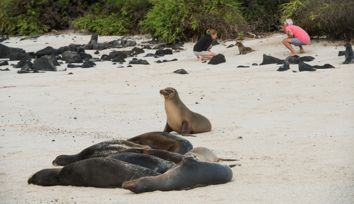 Santa Fe in Galapagos Island with white sand beach and sea lions