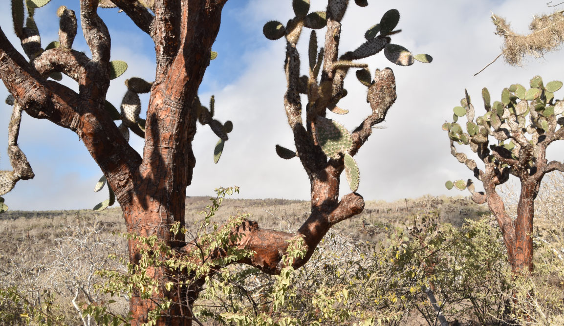 Santa Fe in Galapagos Island landscape with cactus
