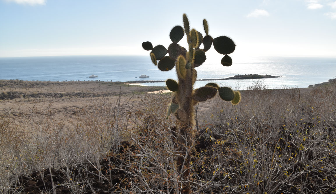 Santa Fe in Galapagos Island view of arid landscape and cactus