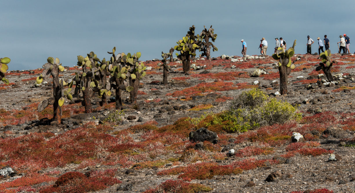 South Plaza in Galapagos Islands landscape with red plants and cactus in a sunny day