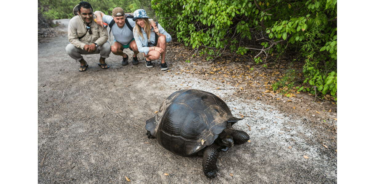Guide and tourists watching a giant tortoise in Galapagos Islands