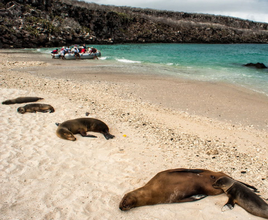 Sea lions resting on Genovesa in Galapagos with tourist on panga