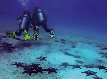 Go Galapagos Scuba Diving