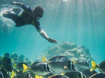 Go Galapagos snorkeling