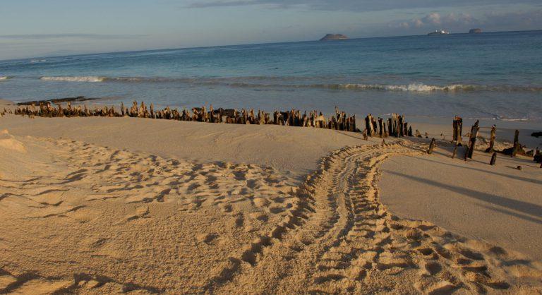 Bachas Beach - Santa Cruz in Galapagos Island beautiful white sand beach in the sunset