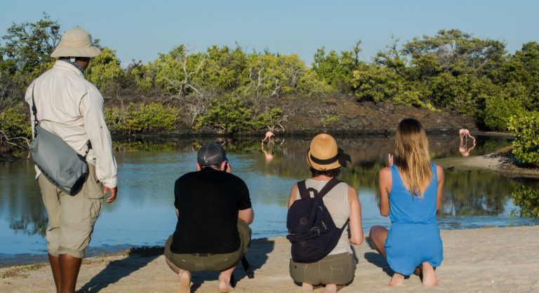Bachas Beach - Santa Cruz in the Galapagos Islands with tourist looking Flemings