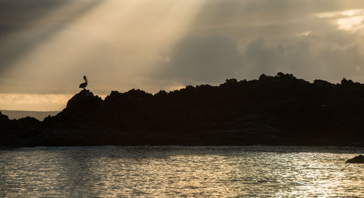 Bachas Beach - Santa Cruz in the Galapagos Islands landscape silhouette of a pelican