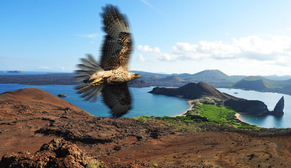 Bartolome in Galapagos Islands landscape, beautiful view of the island with falcon
