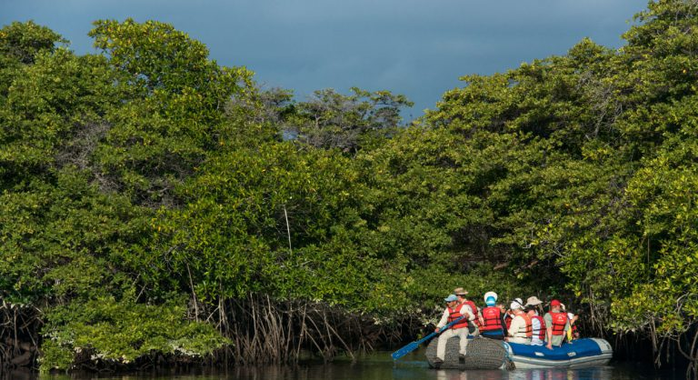 Black Turtle Cove - Santa Cruz in the Galapagos view of mangrove and tourist in panga with a experienced guide