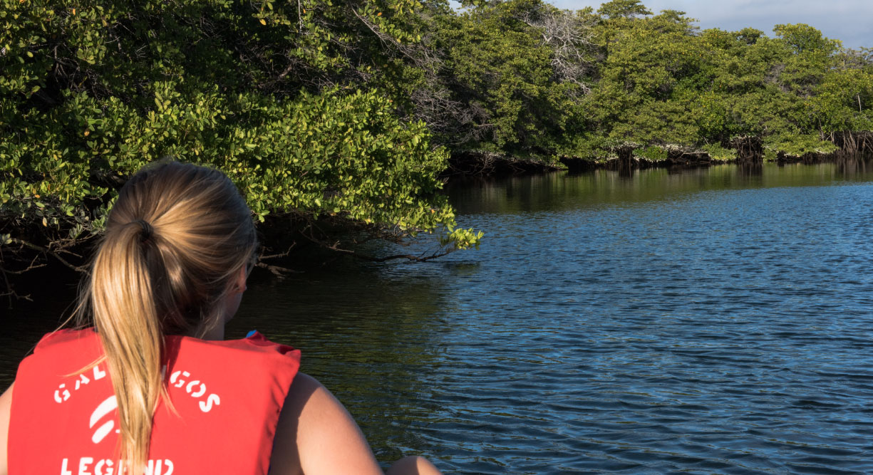 Black Turtle Cove - Santa Cruz in the Galapagos, tourist looking the black mangrove