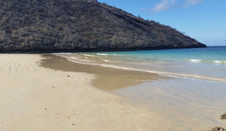 Cormorant Point - Floreana in the Galapagos, view of the beach