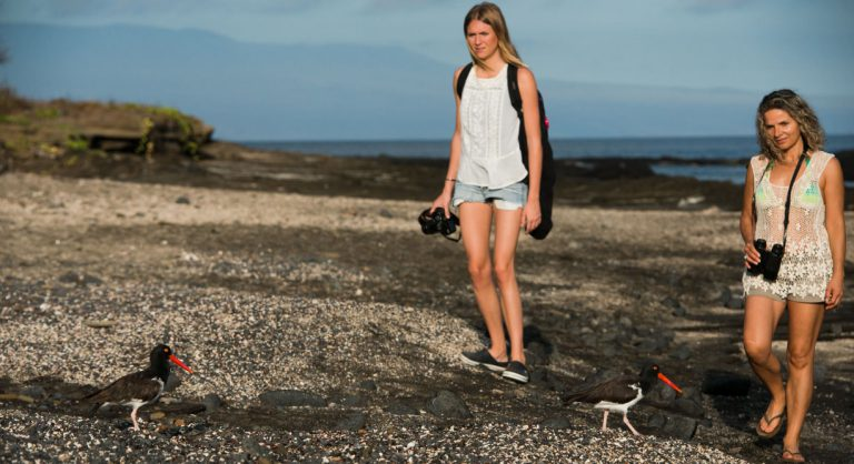 Egas Port in Santiago Island wit rocky beach and tourist looking lava heron