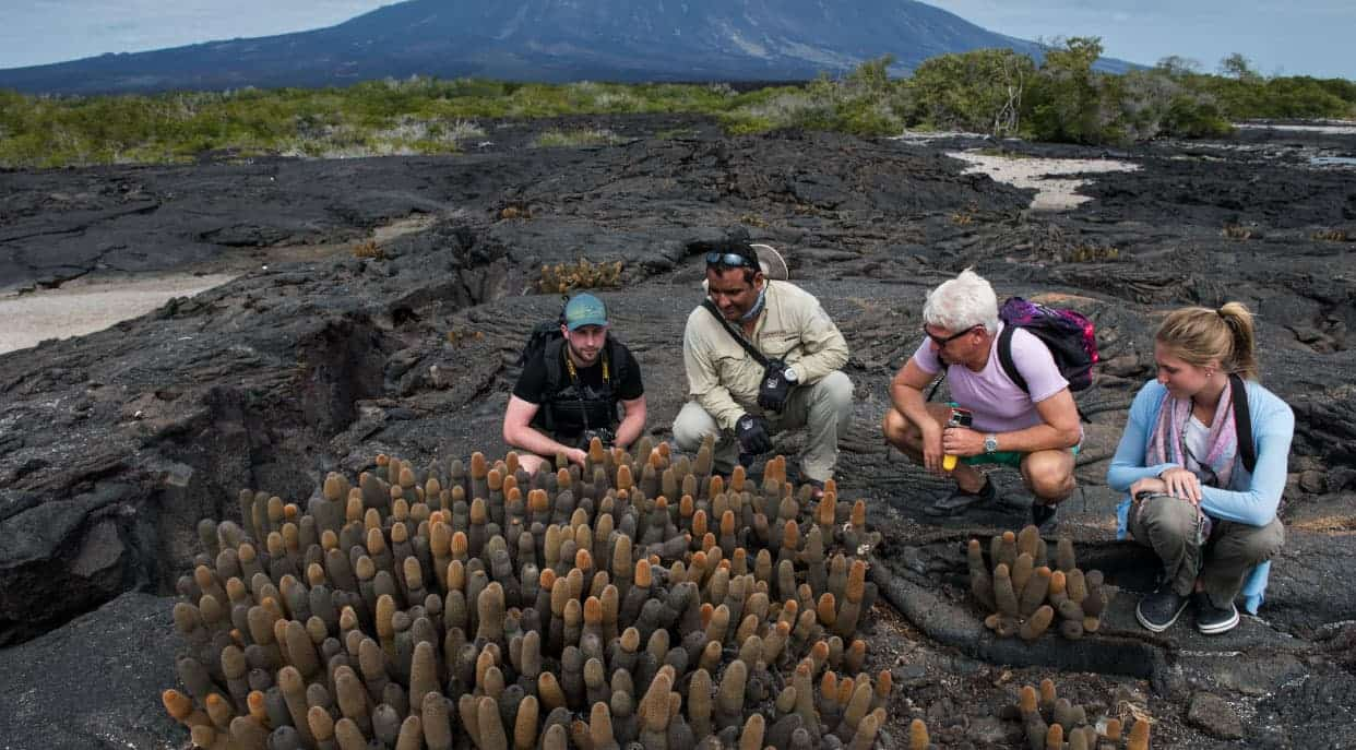 Espinoza Point IN GALAPAGOS ISLAND volcanic island with tourist seeing the lava cactus
