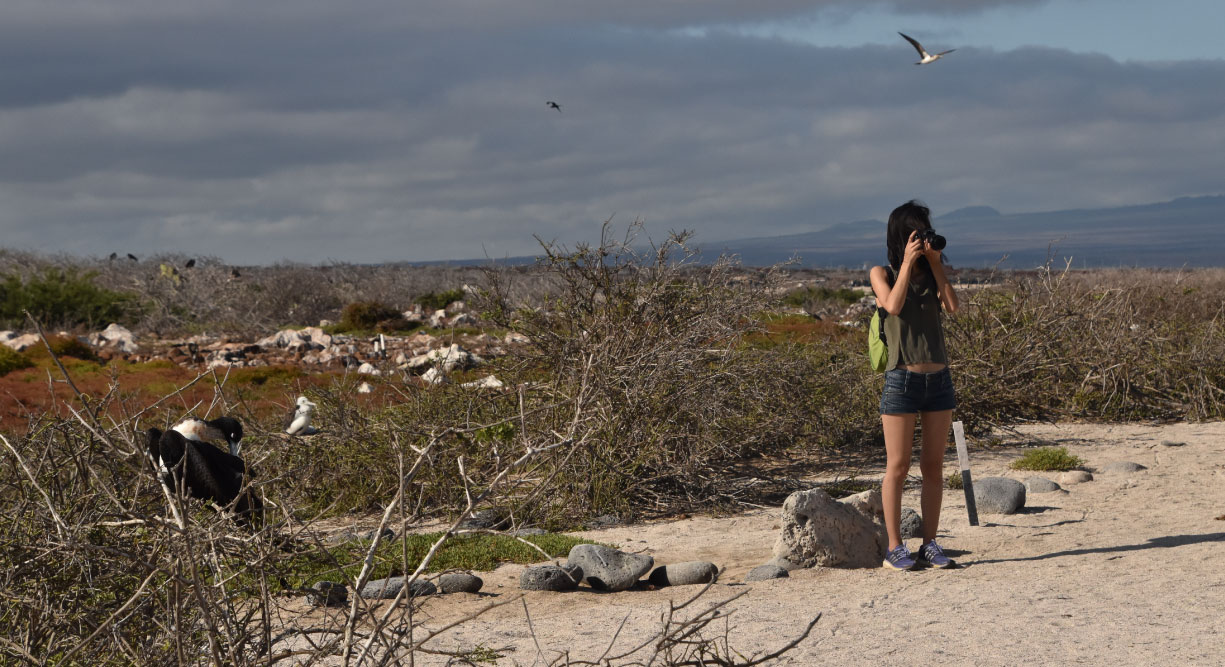 North Seymour in Galapagos Islands with tourist taking a picture and frigates