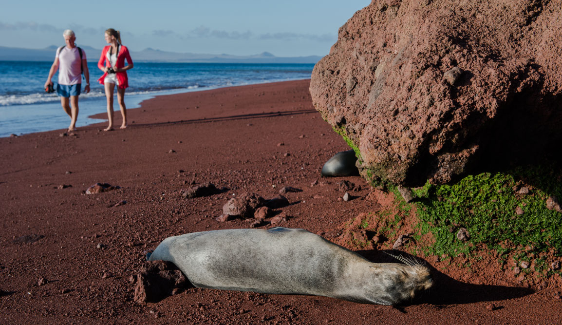 Rabida in Galapagos Islands, view of the red sand with a sea lion sunbathing and tourist walking in the beach