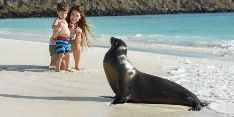 Galapagos fearless sea lion in Española, Gardner Bay