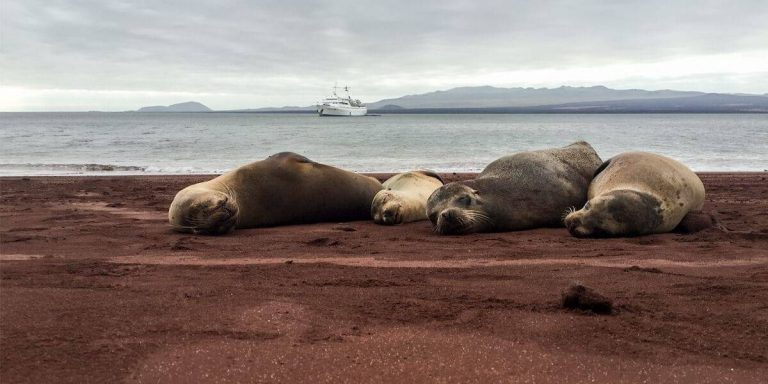 Galapagos sea lions resting in Rabida