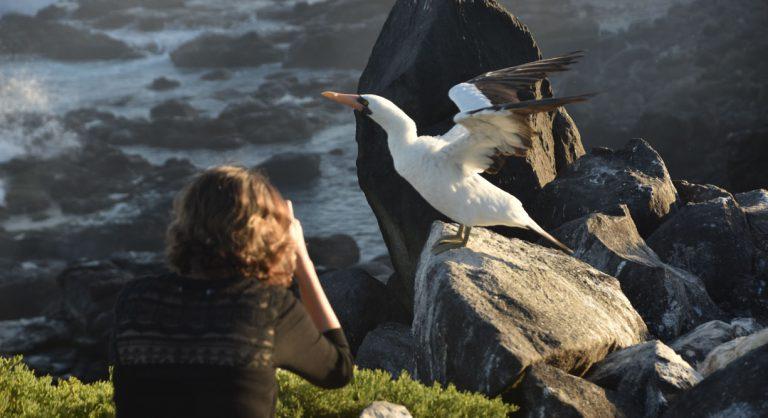 Suarez Point - Española in Galapagos Island tourist taking pictures of a masked boobies