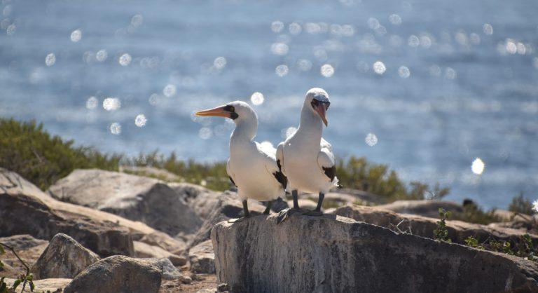 Suarez Point - Española in Galapagos Island view of a masked boobies