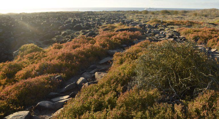 Suarez Point - Española in Galapagos Island landscape