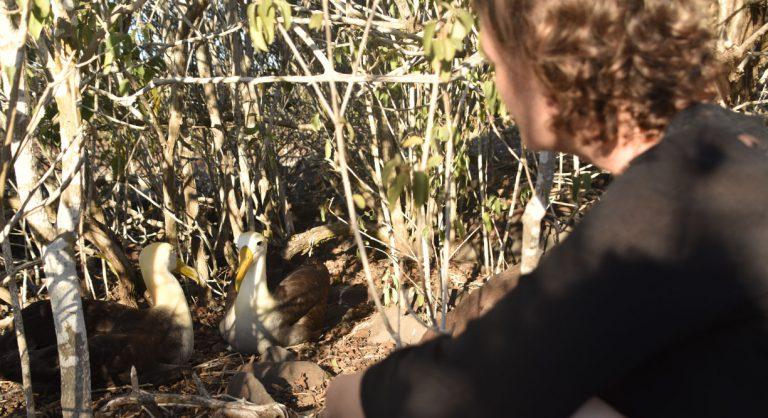 Suarez Point - Española in Galapagos Island, tourist looking the albatroses