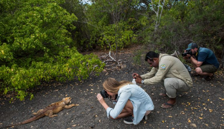 Urbina Bay - Isabela in the Galapagos with tourist taking pictures to Land Iguana