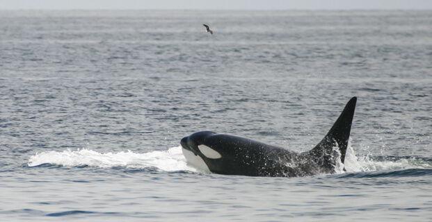 Whale Galapagos Islands - Ecuador