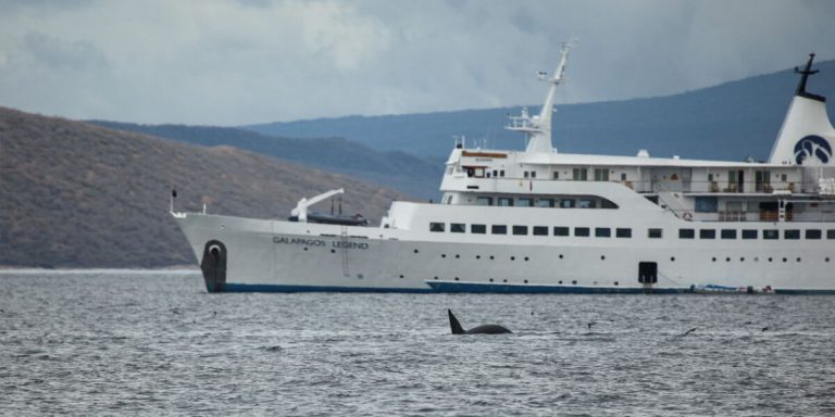 Whale in Galapagos Islands, swimmer's daily experience onboard the M/V Galapagos Legend