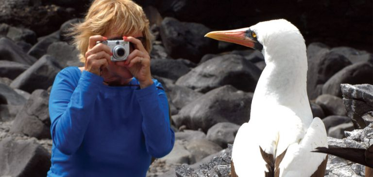 Tourist taking a photo to a Masked Booby in Galapagos