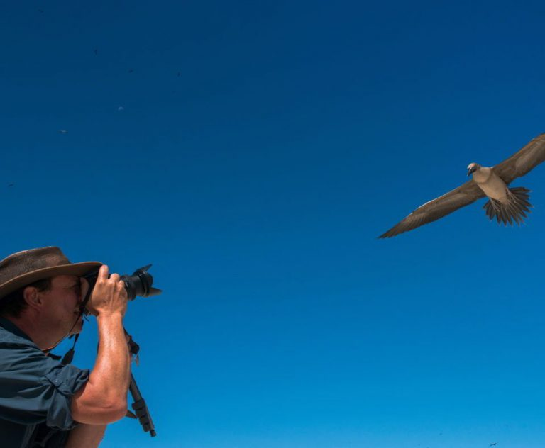 Tourist photographing a red-footed booby on the Genovesa island Galápagos