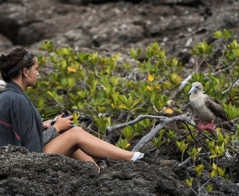 Photographer taking pictures of a Red footed booby on Genovesa Islands Galapagos