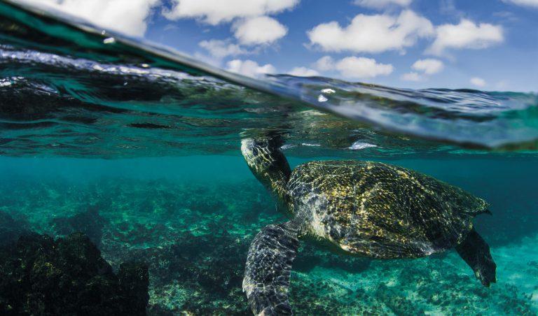 Go 1: Galapagos Cruise & Basic Ecuador
