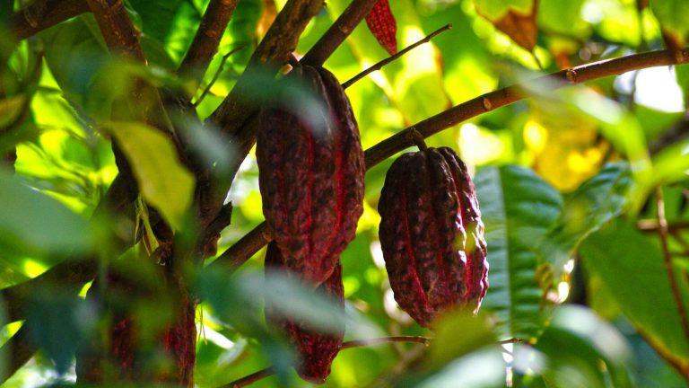 Tropical Hacienda & its Flora and Fauna