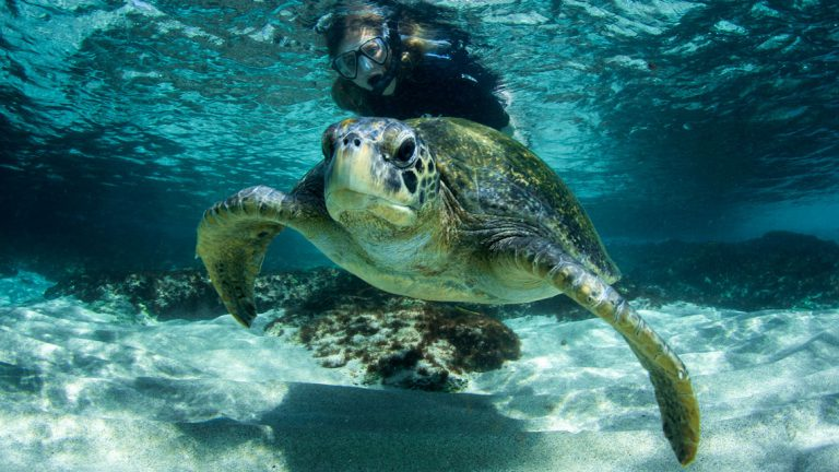 Snorkeling: Interact with marine life