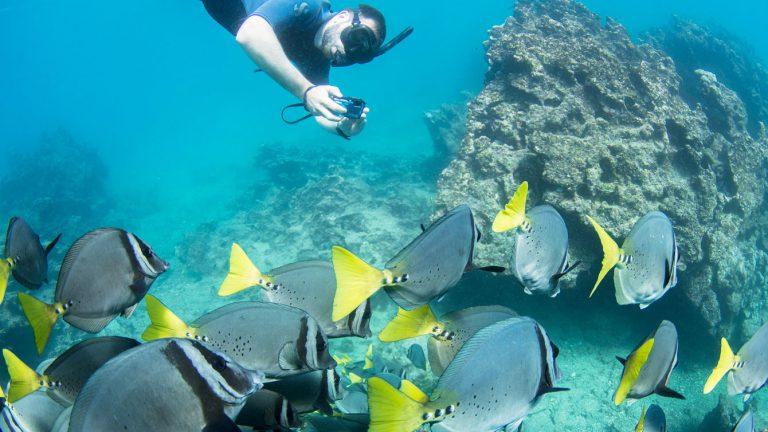 snorkelingfish